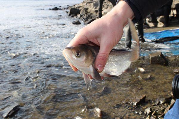 ВЯрославской области вводится ограничение налов рыбы