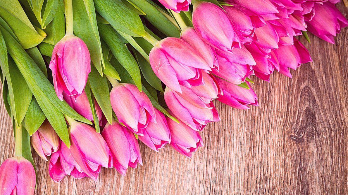 ВЯрославской области будут растить миллионы тюльпанов